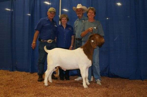 R A Mr. Texas Gunner - Boer Goat Buck